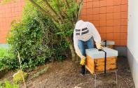 Apiculture urbaine : deux ruches à la caserne des pompiers